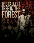 The Tallest Tree in the Forest poster
